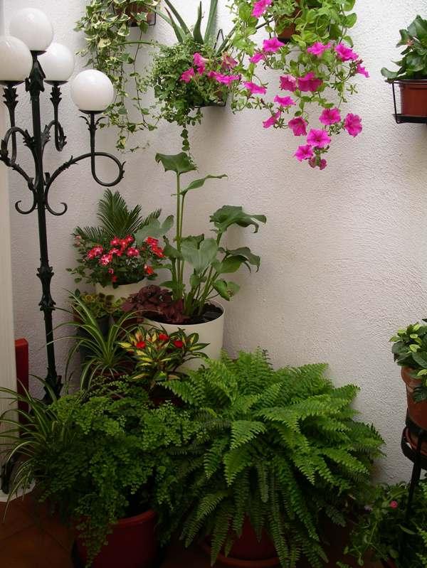 idea de jardín con bambú arreglar patio interior en el que apenas da el sol