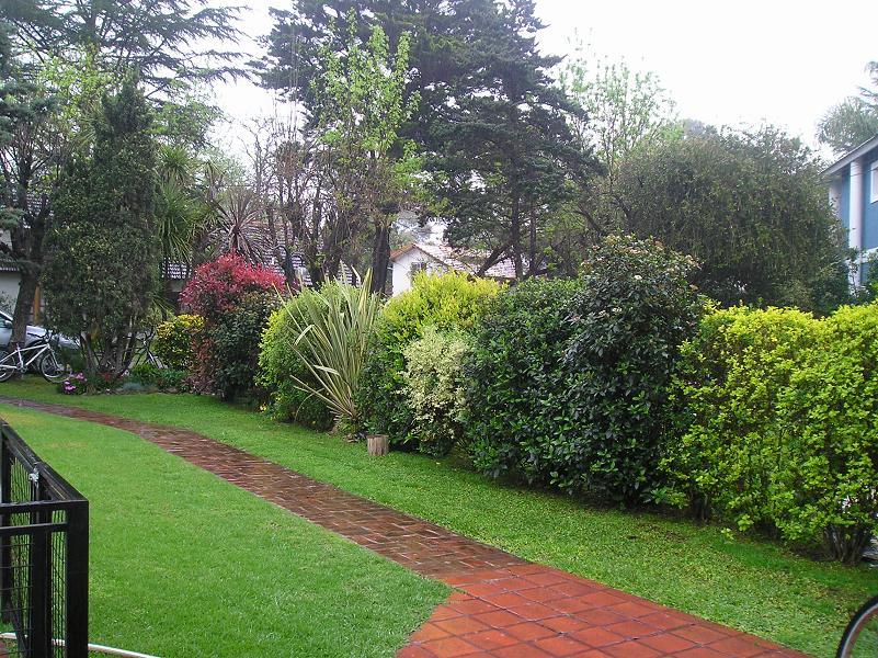 Trepadora para una cerca de hoja perenne crecimiento for Arboles de hoja perenne para clima continental