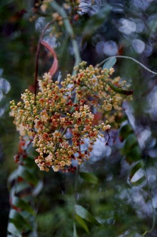 Arboles arbustos y setos - Arboles y arbustos ...