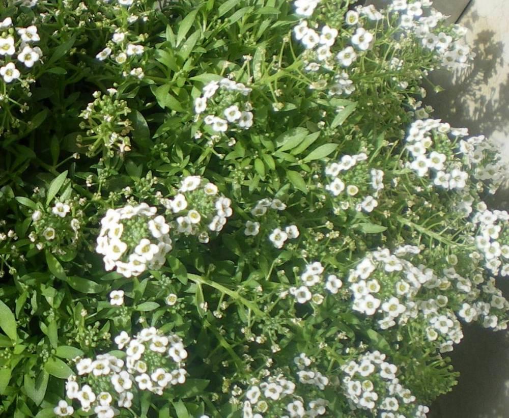 Pequenas Flores Blancas Fotos