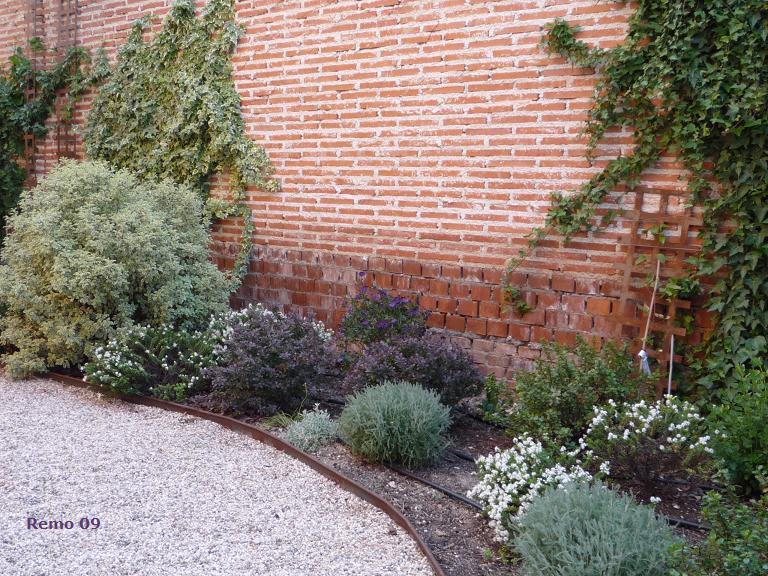 Ayuda para dise ar jardin en m xico for Jardin 5 esquinas