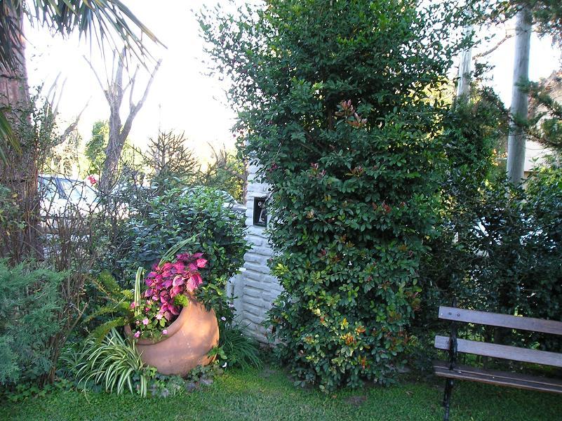 tinajas con plantas poned fotos p gina 3