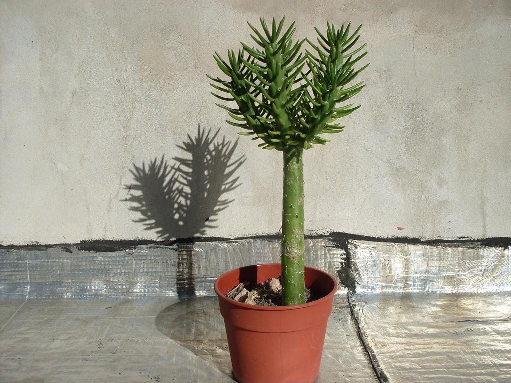 Nombre y origen de este cactus - Infojardin cactus ...
