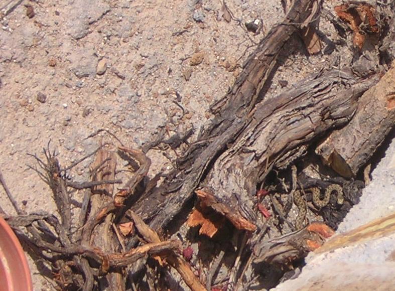 Serpiente o culebra en mi jard n es venenosa for Casa jardin culebra