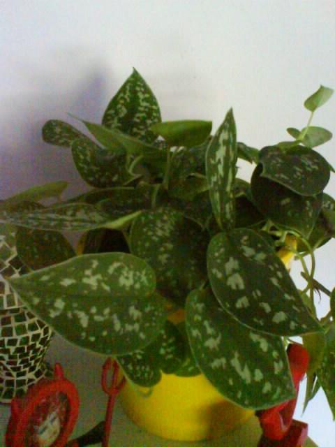Planta de interior con flor todo el a o y de pocos for Plantas de todo el ano