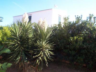 Yucca gloriosa arbusto cactus - Yuca infojardin ...