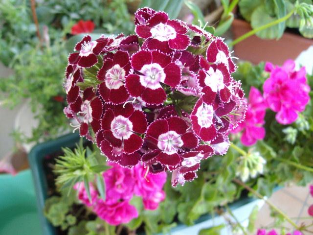 Flores preciosas imagui - Fotos flores preciosas ...