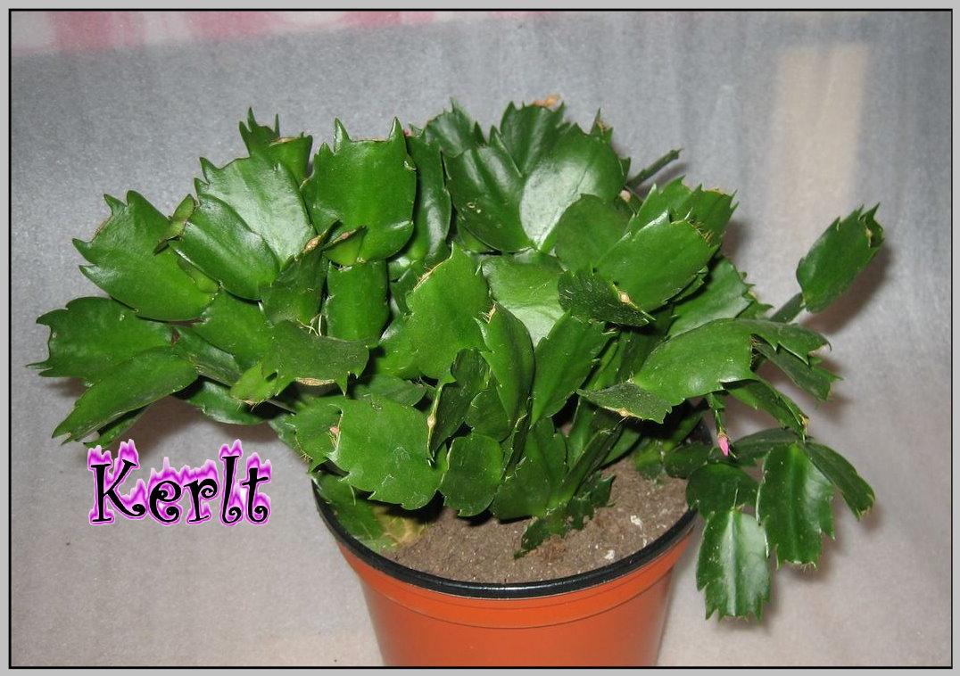 Fotos de suculentas varias y jardines de cactus holidays oo for Fotos de cactus