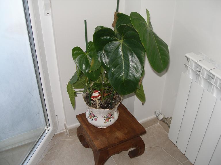 Riego de plantas de interior y consejos para regar p gina 2 for Plantas de interior fotos y nombres