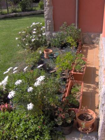 Qu tipo de plantas y flores poner en jardinera for Que plantas poner en una jardinera