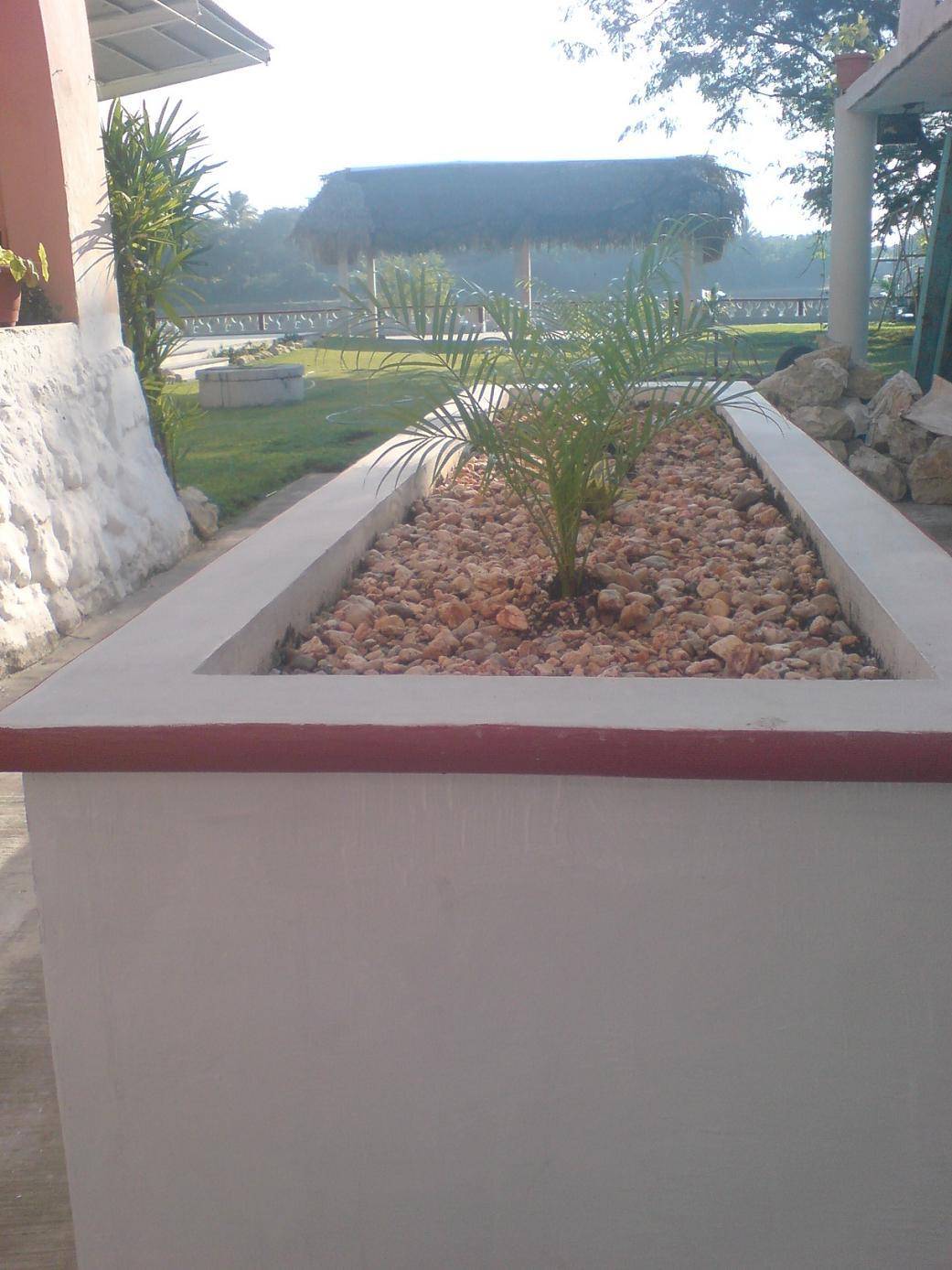 C mo decorar con plantas jardinera de concreto fotos - Jardineras con plantas ...