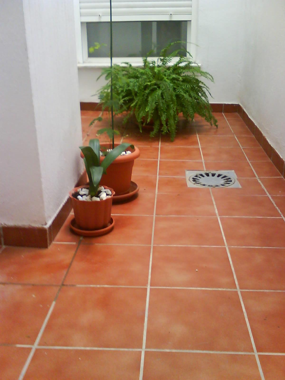 Plantas para patio con muy poca luz for Patio de luces normativa
