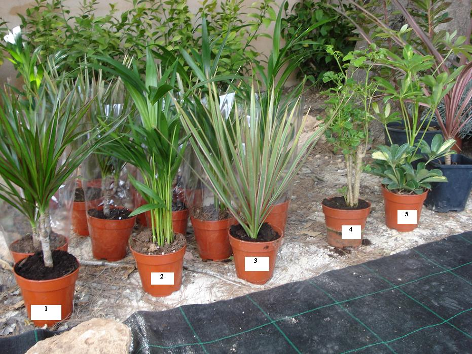 Plantas del lidl para saber nombre for Plantas de interior lidl