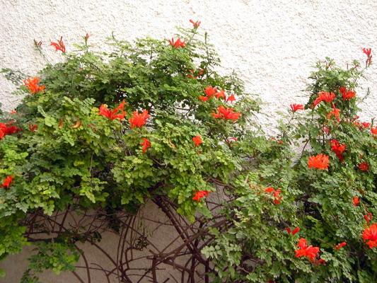 Plantas de exterior resistentes al frio dise os for Arbustos de exterior resistentes