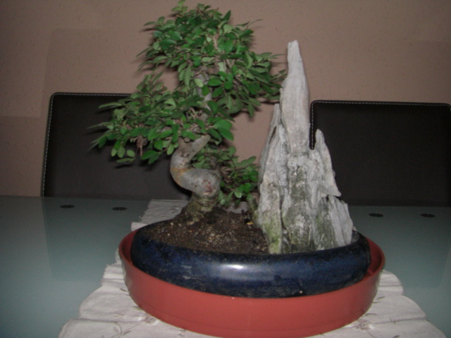 Foro de infojard n - Como se cuida un bonsai ...