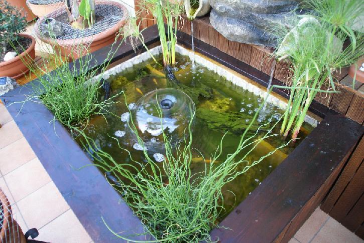 Estanque en una terraza for Estanque ecologico